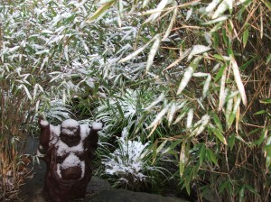 Even Buddha is questioning the weather gods!  He's under the Clump Bamboo around my upper pond.