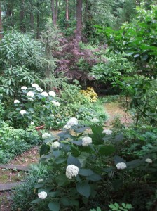 A view through the woodland garden.