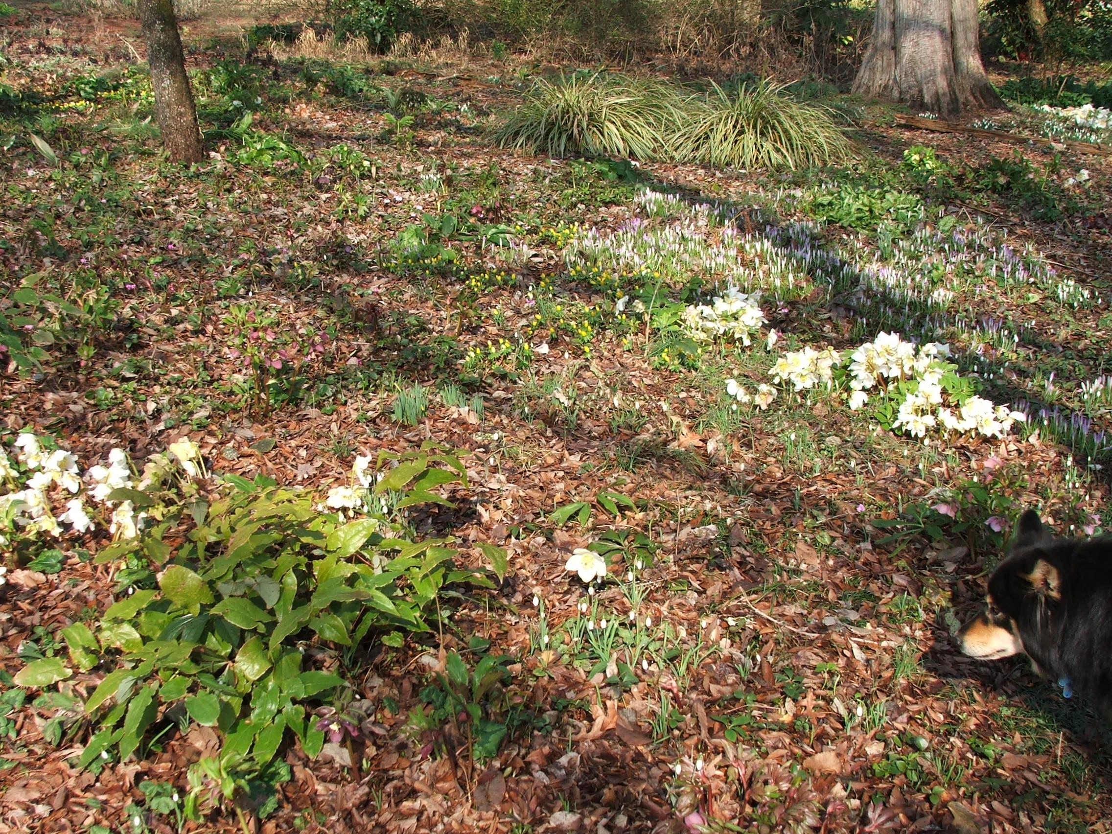 Nancy Goodwin\'s Montrose Garden in Hillsborough, NC – Meandering