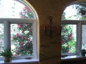 The same Camellia, looking out through the dining room windows...
