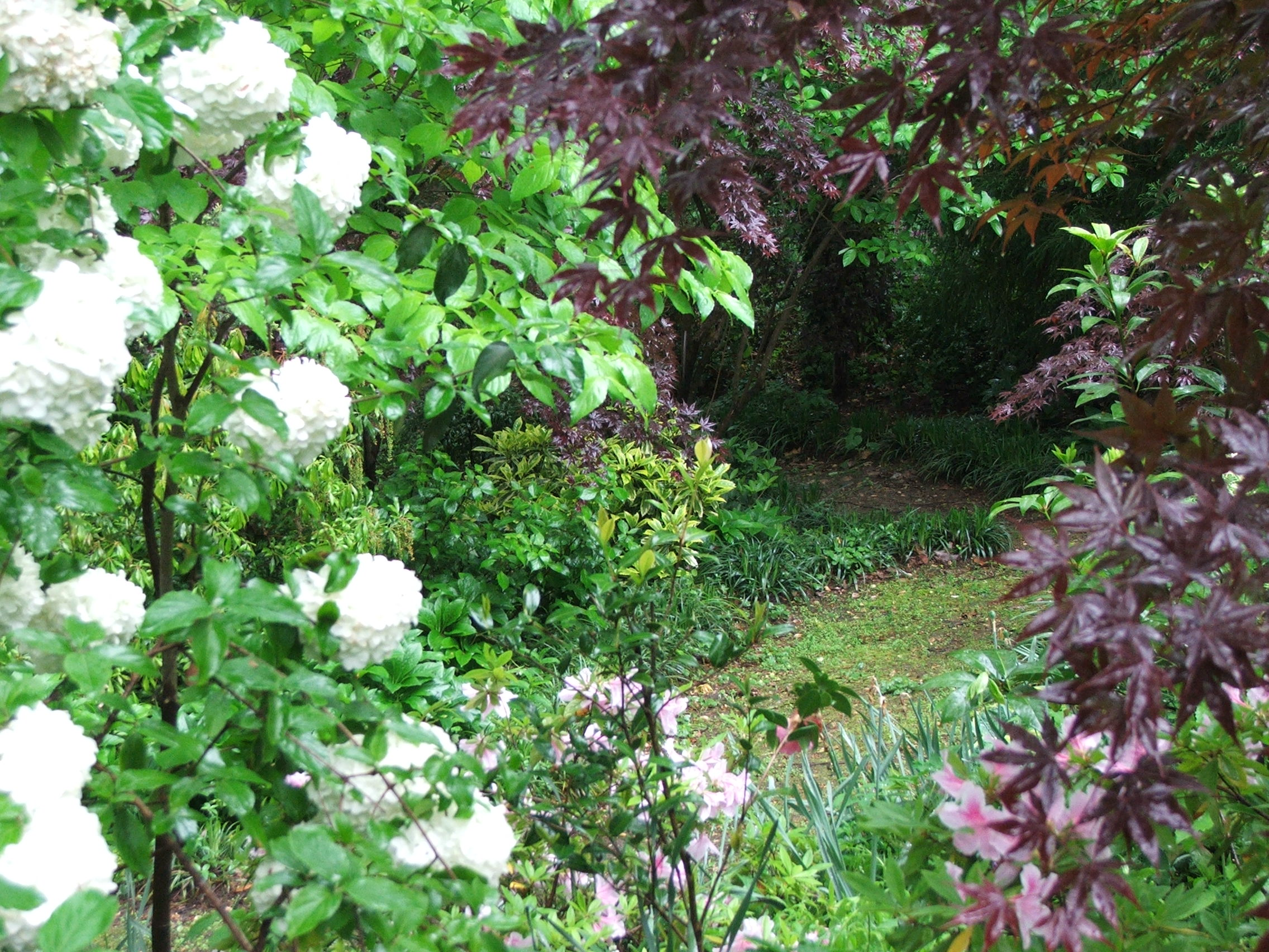 Woodland Cottage's Gardens on Tour
