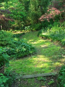 Mossy pathways at Woodland Cottage