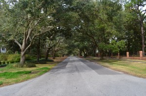 And a lovely, canopied street here in Wilmington--appropriately called Live Oak Drive