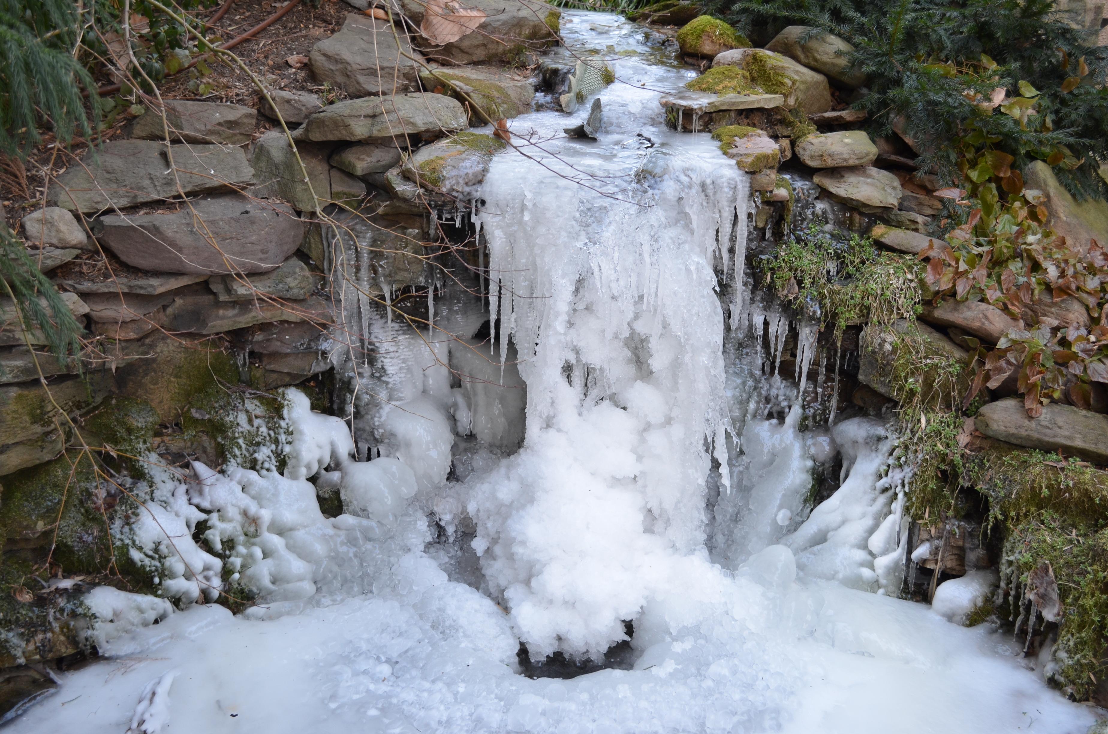 the winter garden meandering