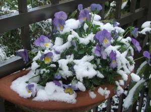 April.snow.4.7.07 003