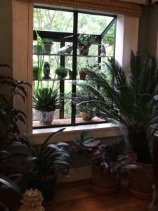 houseplants-10-21-10-064