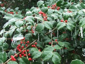 Christmas.2009.12.28.09 009