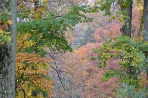 Woodland.Cottage.Fall.2014.11.12.14 2014-11-12 001